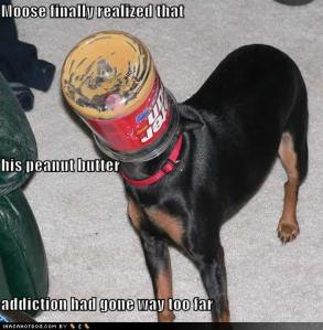 funny-dog-pictures-peanut-addiction